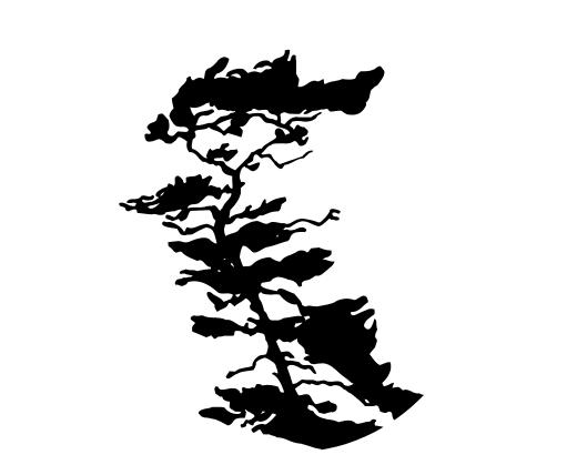 True North logo dingbat